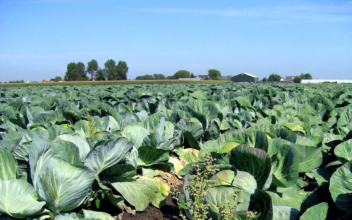 biologische groente