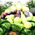 Biologische voeding toch gezonder?